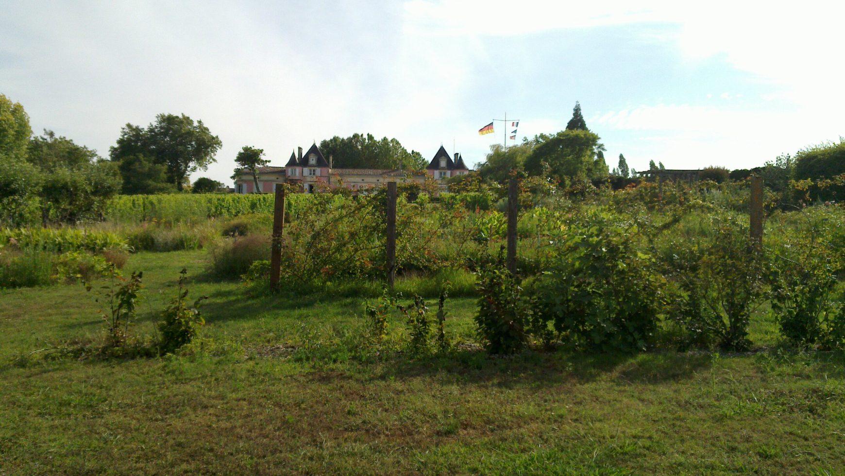 #2 Geschichten aus Bordeaux – Direkt an der (Wein-)Quelle: Bordeaux-Bashing